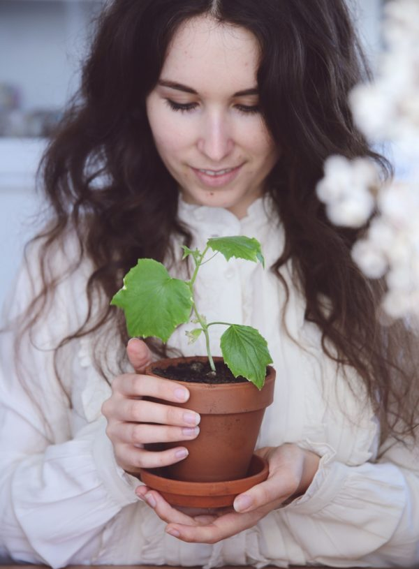 Projekt Dachgarten – Der Wunsch nach Grün
